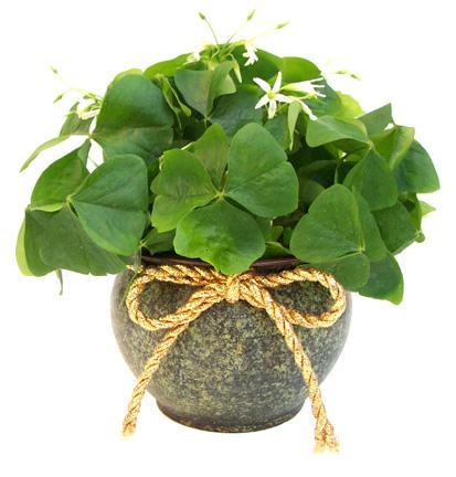 Image result for saint patricks day flower arrangement