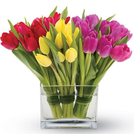 https://carithers.files.wordpress.com/2011/02/candy-tulips.jpg