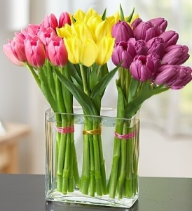 Candy Tulips